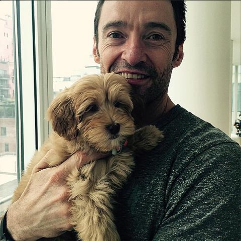ヒュー・ジャックマンと新しい愛犬