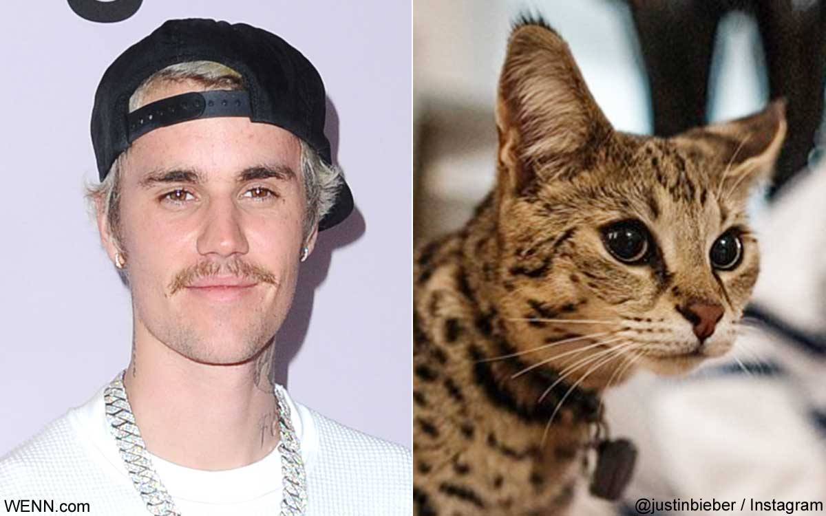 ジャスティン・ビーバーと、愛猫のスシ