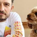 オーランド・ブルームと、行方不明の愛犬マイティ