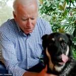 ジョー・バイデンと、愛犬メジャー