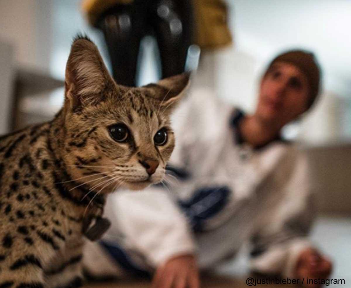 ジャスティン・ビーバーと愛猫スシ