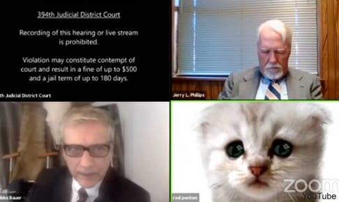 猫フィルターのまま会議に出席した弁護士