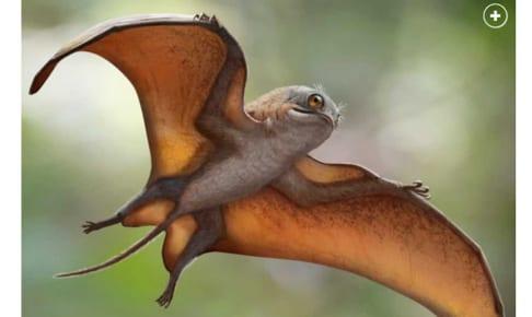 Sinomacrops bondei