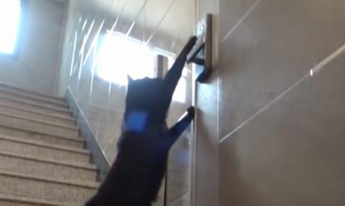 ナンバーロックを解除するネコ
