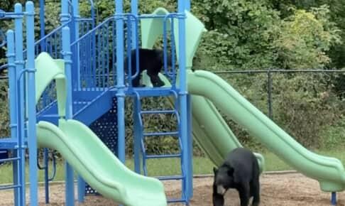 すべり台で遊ぶクマ