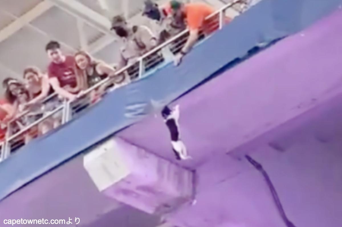 スタジアムの2階席からおっこちそうなネコ