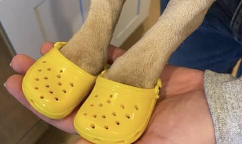 犬用サンダル